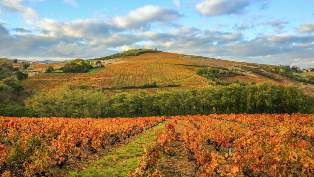 Les vignes de Salles-Arbuissonnas en automne